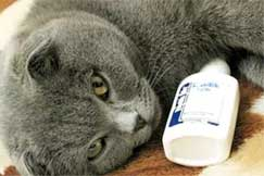 Что делать, если котенок чихает