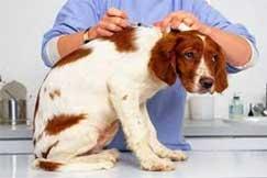 Комплексная вакцинация собак