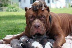принять роды у собак