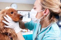 эндокринолог для собак