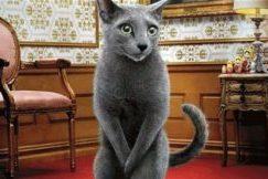 Кастрация кота и восстановление