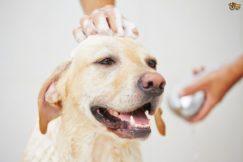 Как правильно и насколько часто можно  мыть животных?