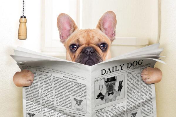 Диарея у собак и кошек