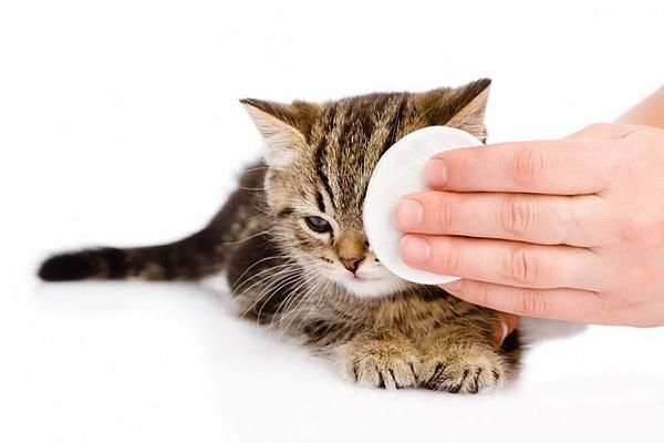Правила ухода за глазами кошек