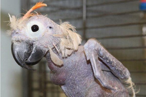 оперение у птиц