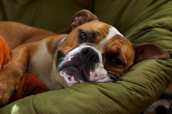 Неврологическое заболевание у собак