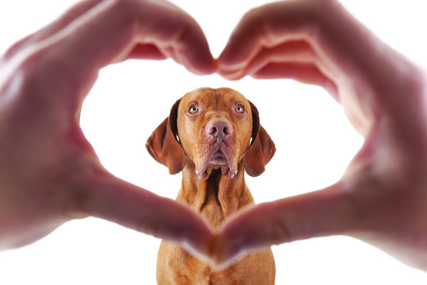 Эндокардиоз у собак