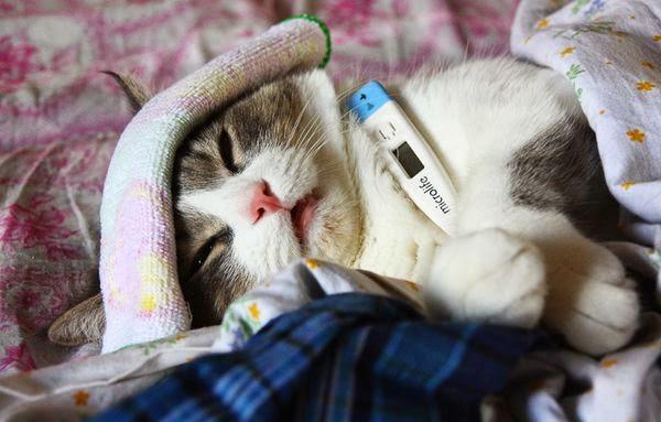 Пневмония собак и кошек