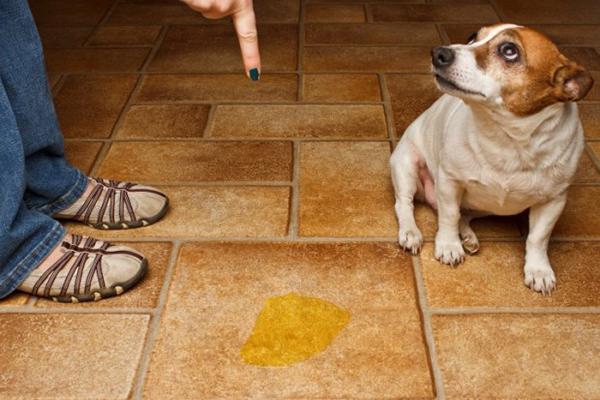 Цистит у домашних животных