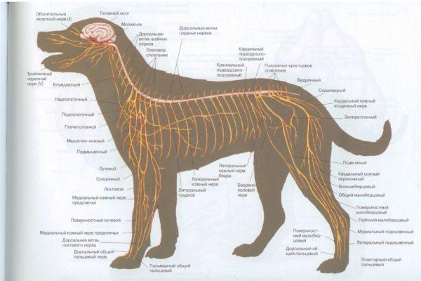 Когда стоит посетить ветеринарного врача — невролога?