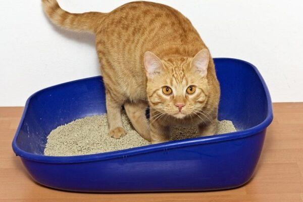 Подбираем наполнитель для кошачьего туалета